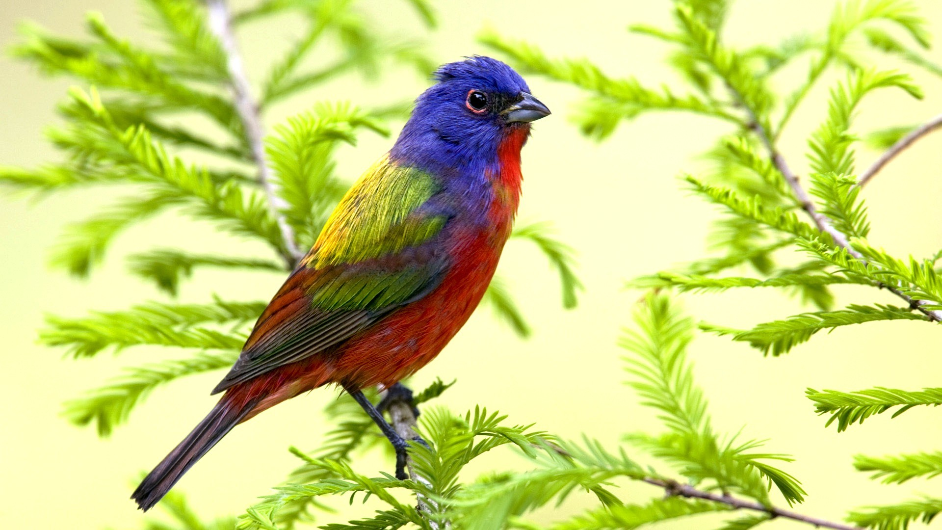 nature multicolor Birds Painted HD Wallpaper