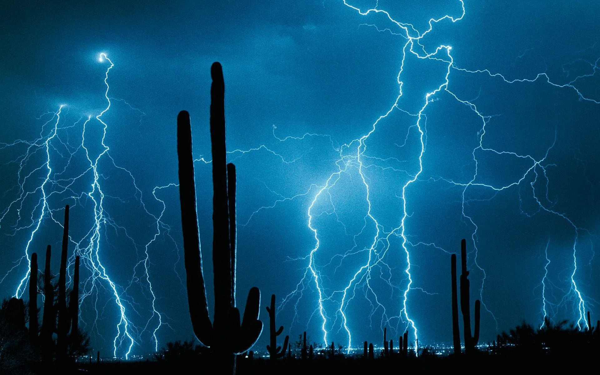 nature night Lightning cactus HD Wallpaper
