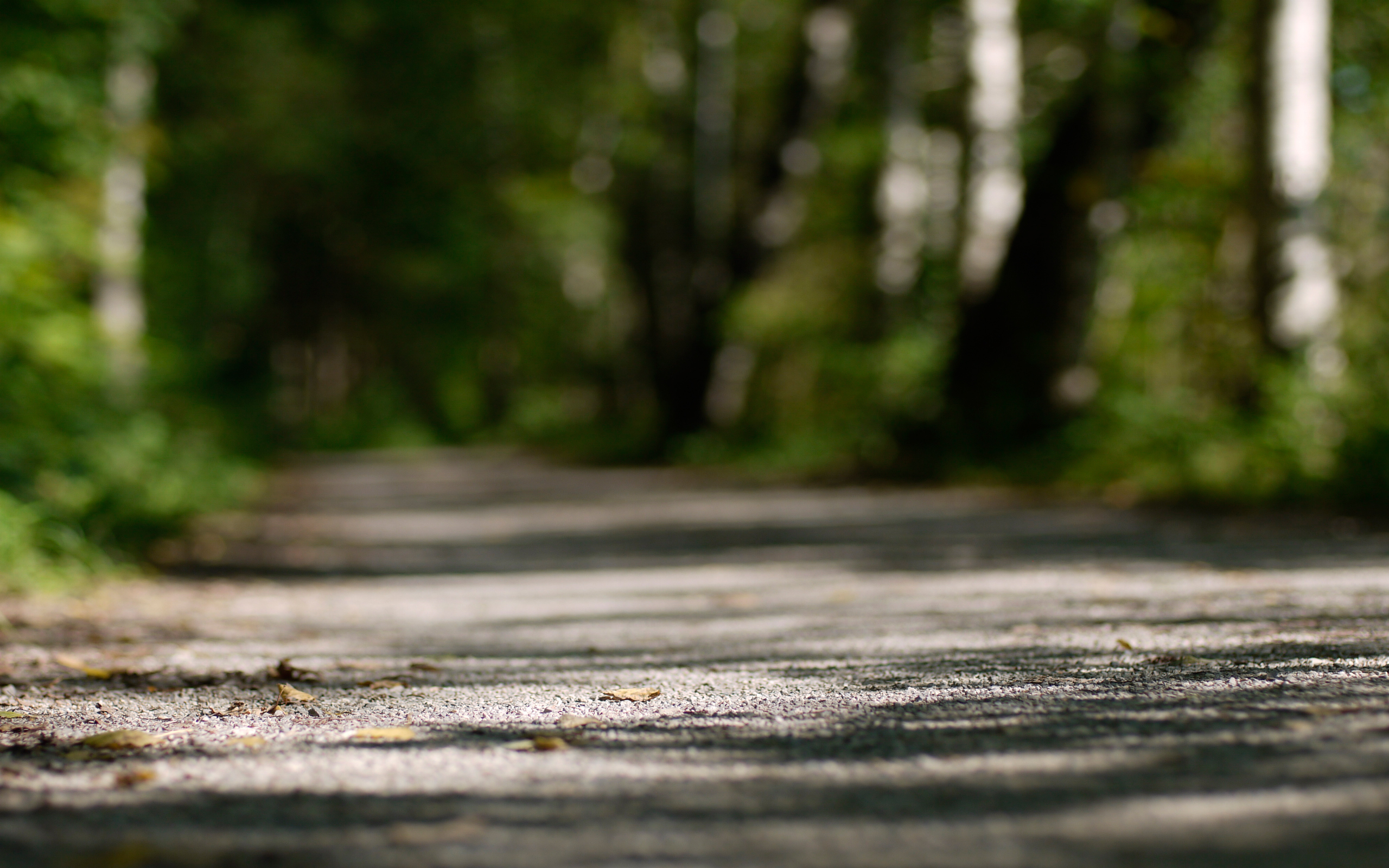 nature paths bokeh depth HD Wallpaper