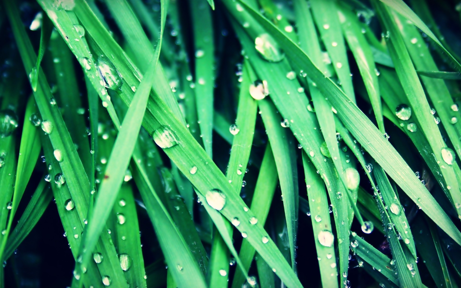 nature rain grass Plants HD Wallpaper