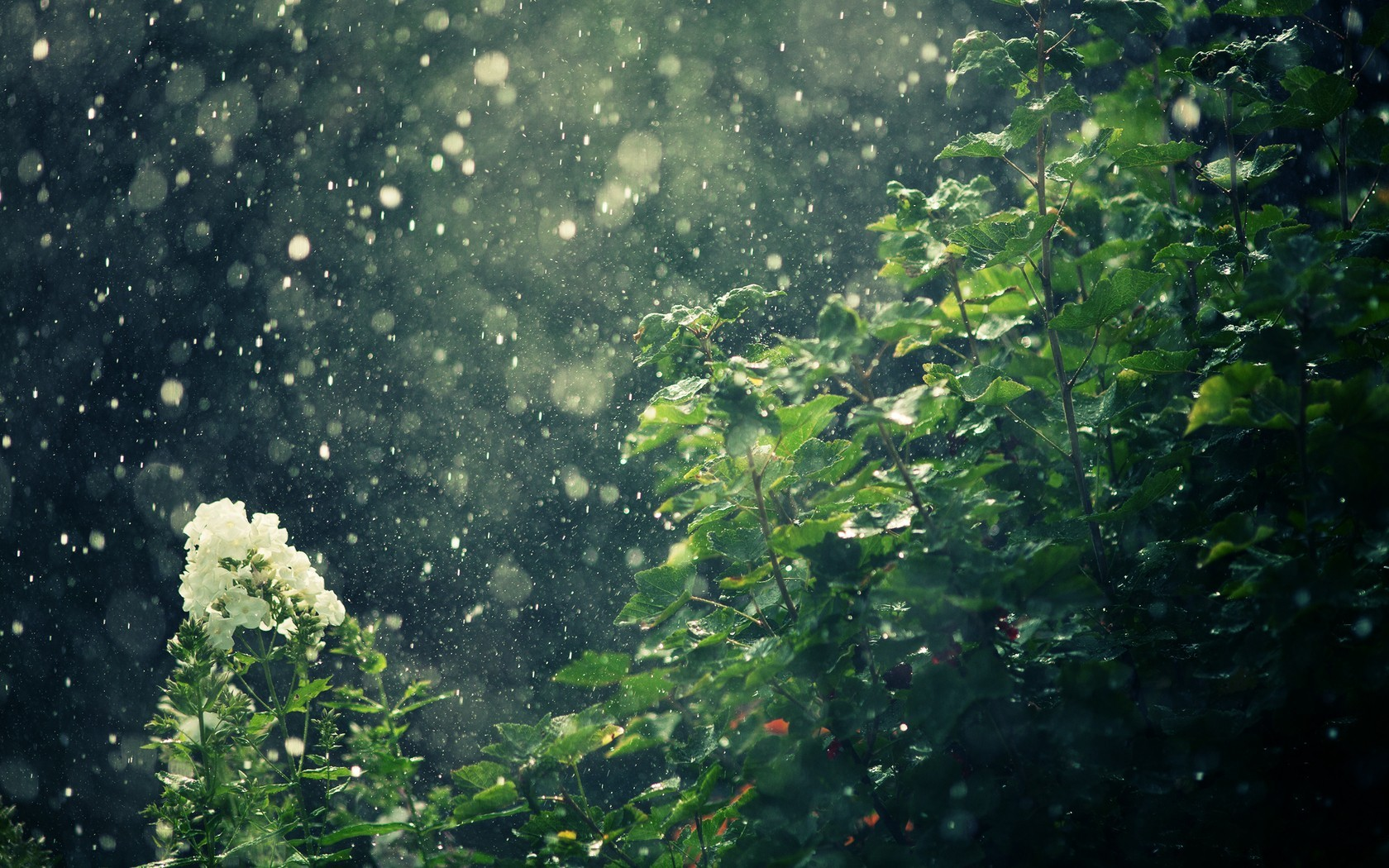 nature rain macro HD Wallpaper