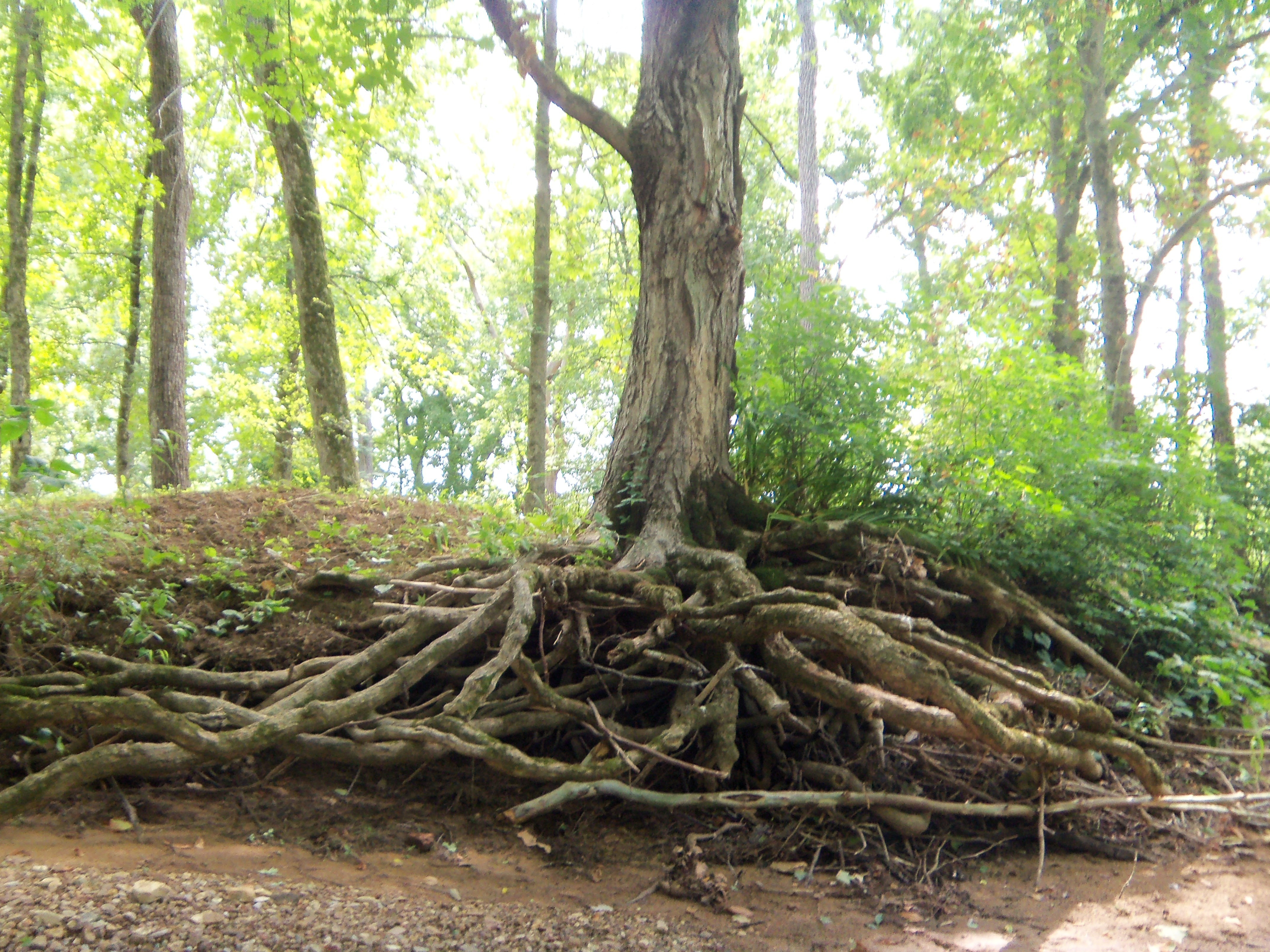 nature roots tree trunk HD Wallpaper