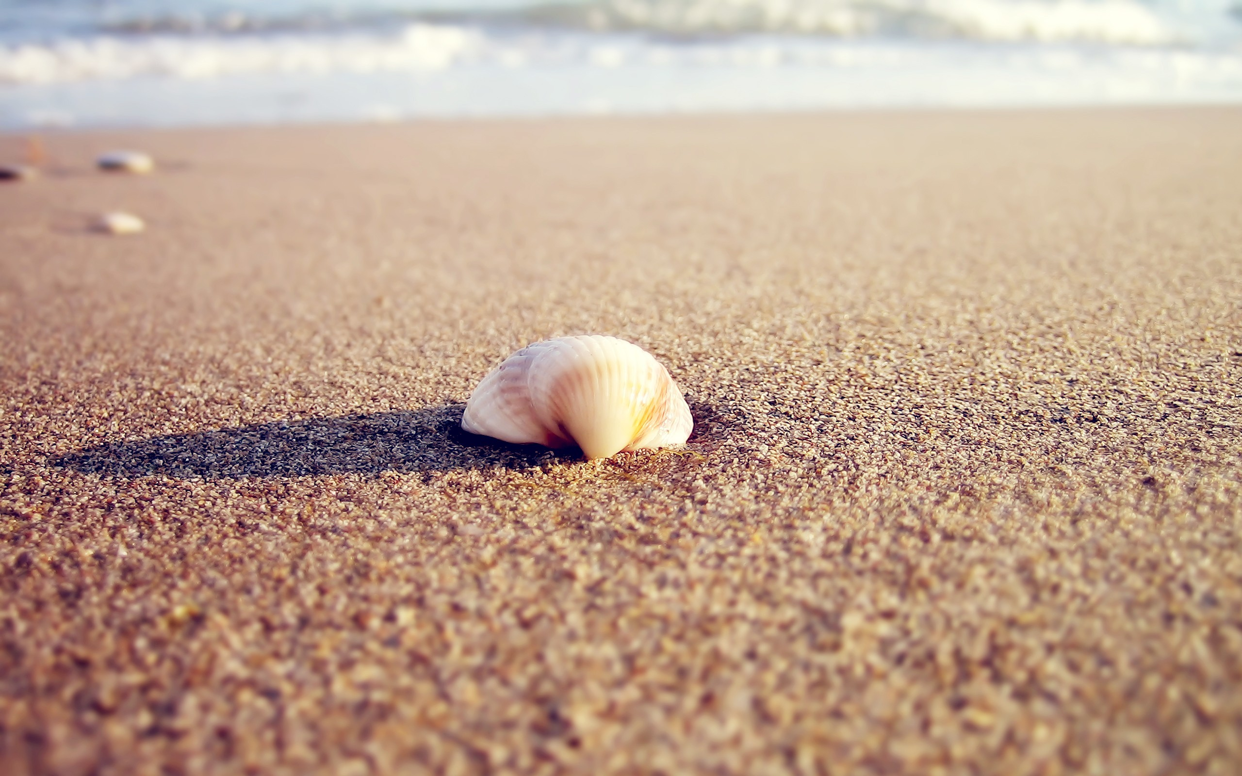 nature sand macro seashells HD Wallpaper