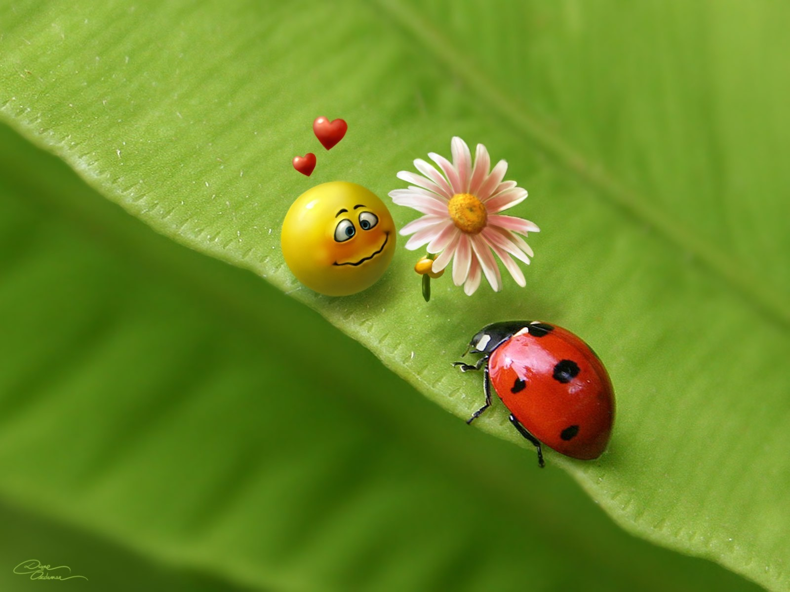 nature smiley face ladybirds HD Wallpaper