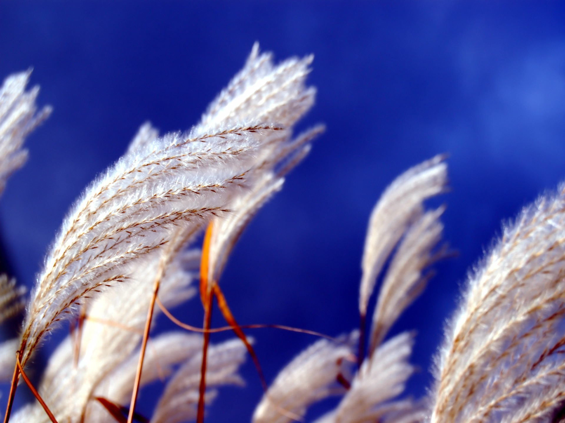 nature spikelets