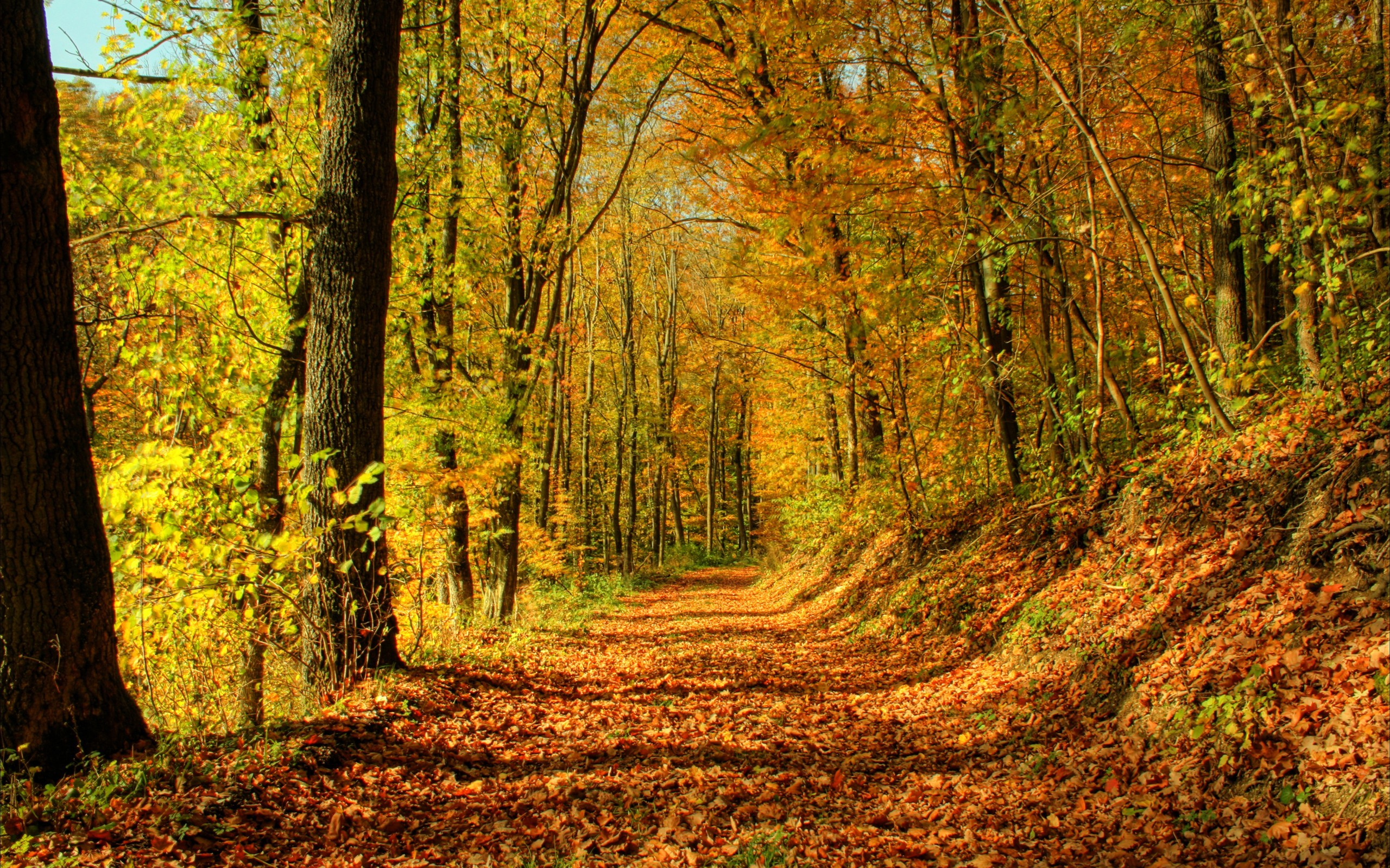 nature Trees autumn forests HD Wallpaper