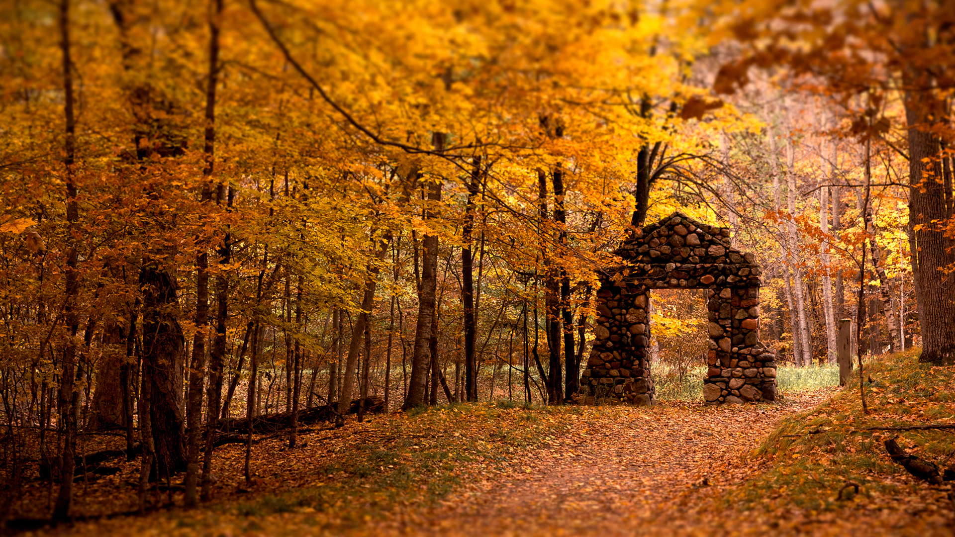 nature Trees autumn yellow HD Wallpaper