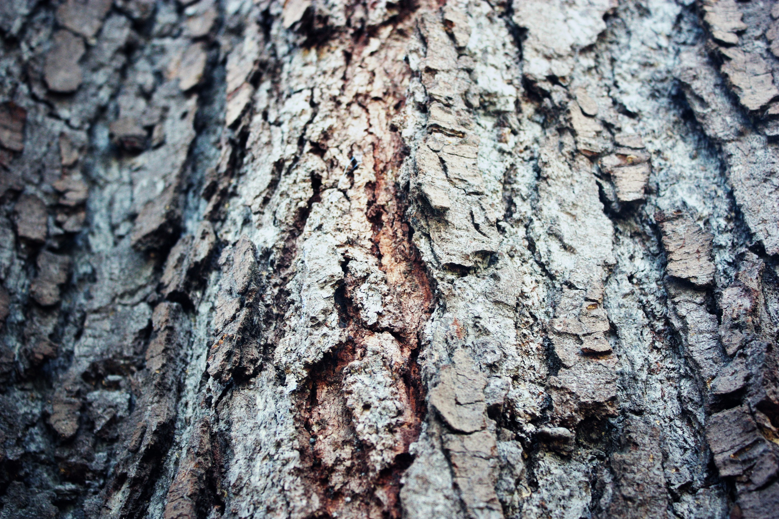 nature Trees bark depth