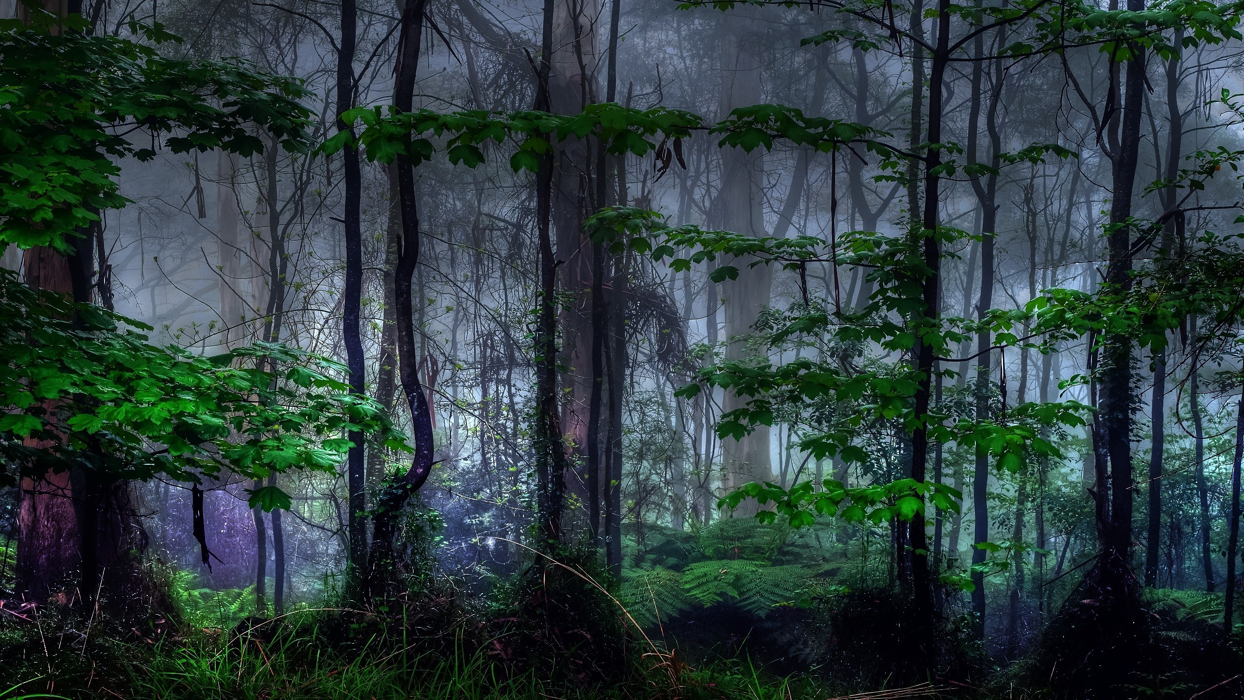 nature Trees dark forests HD Wallpaper