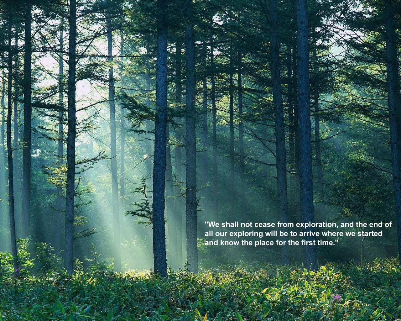 nature Trees forest Quotes HD Wallpaper