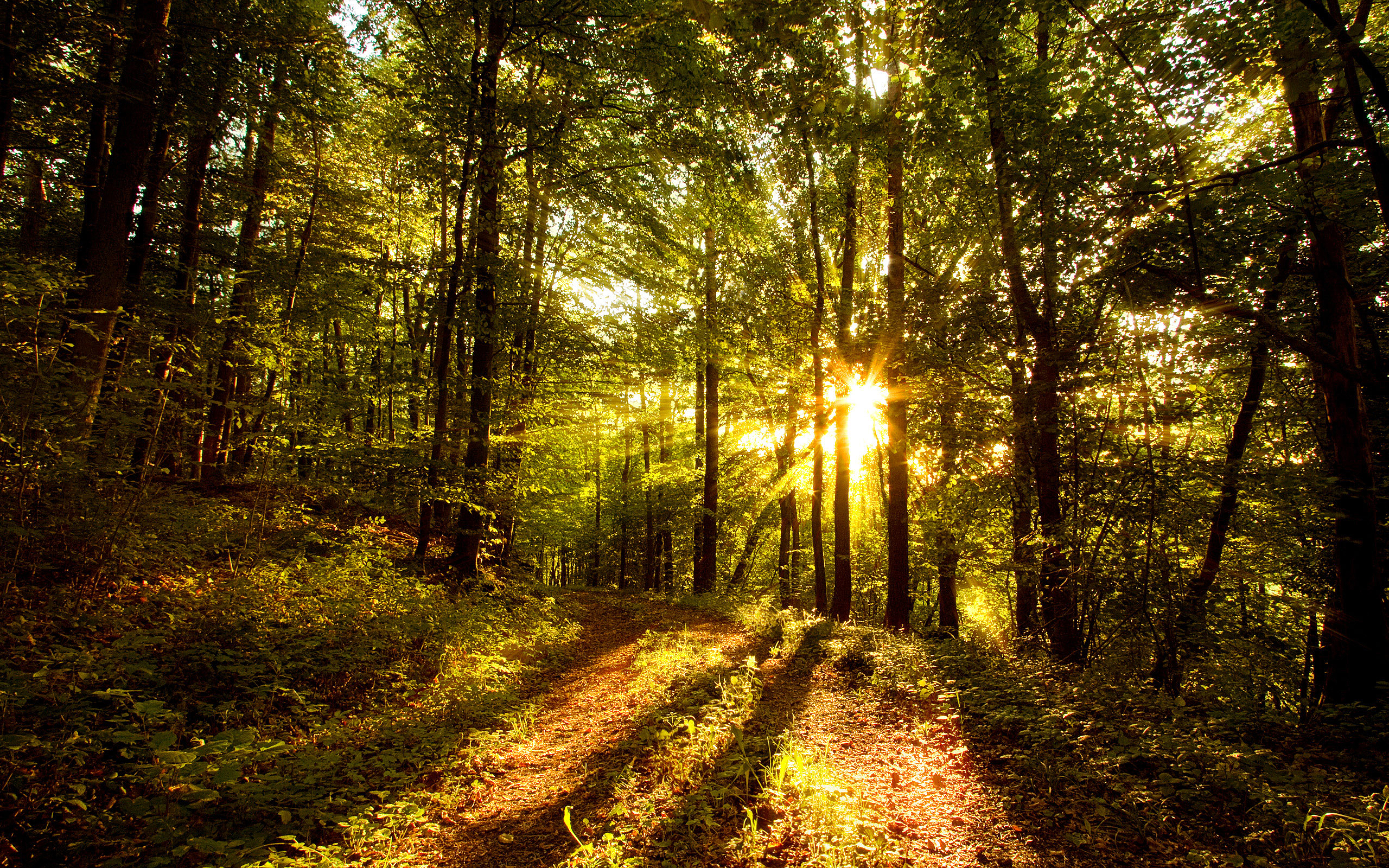 nature Trees forest sunlight HD Wallpaper