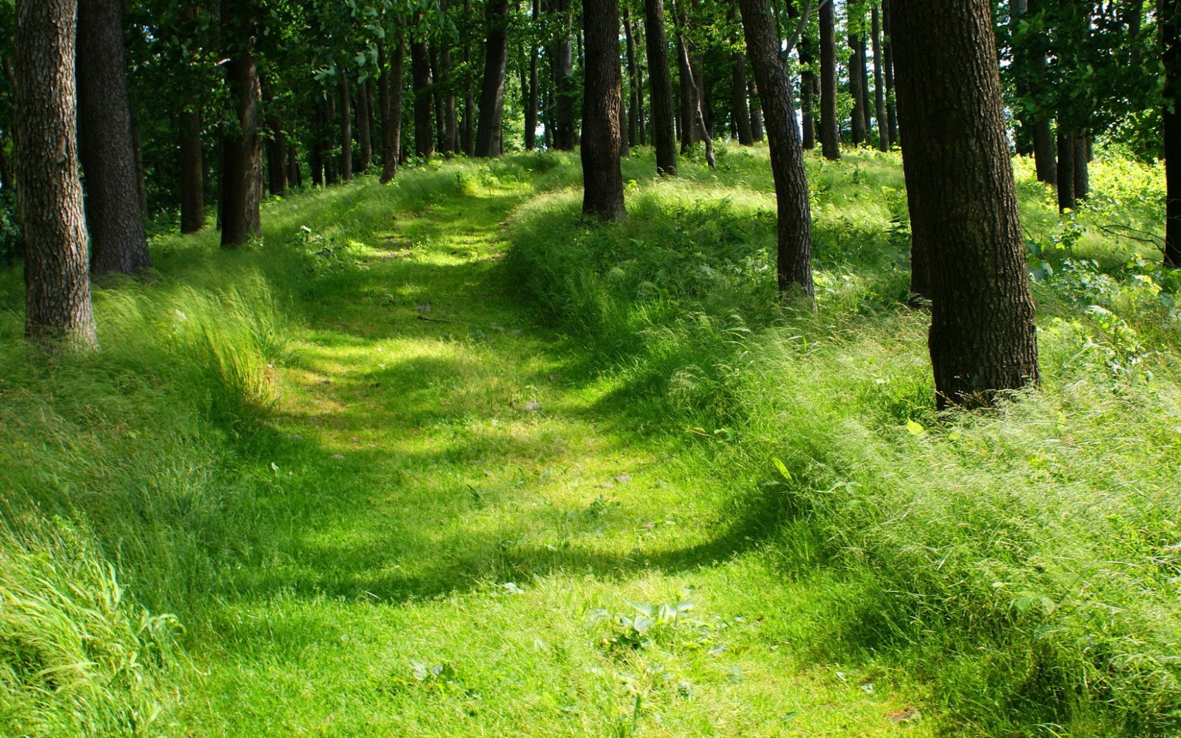 nature Trees forests paths HD Wallpaper