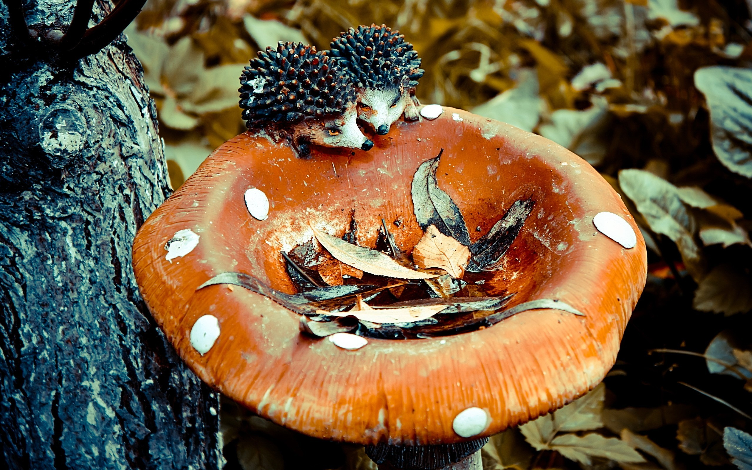 nature Trees mushrooms hedgehogs