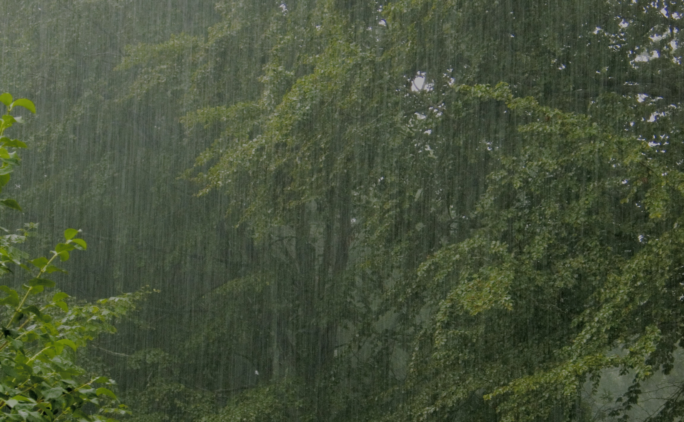 nature Trees rain forest HD Wallpaper