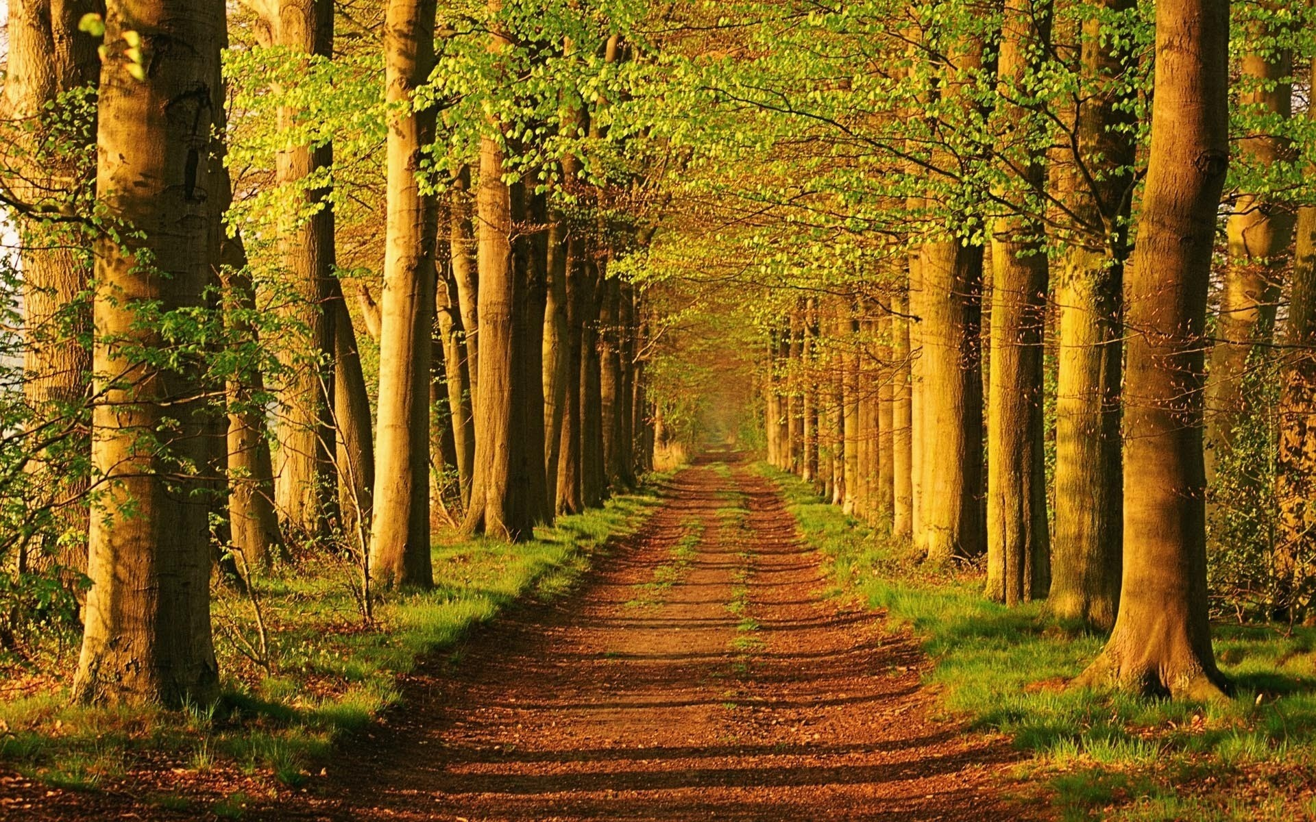 nature Trees roads Parks HD Wallpaper