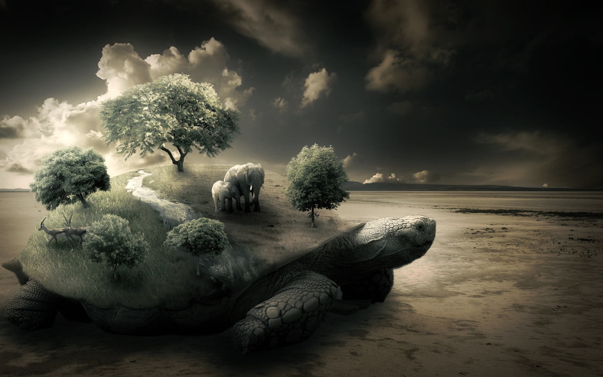 nature Trees turtles elephants HD Wallpaper