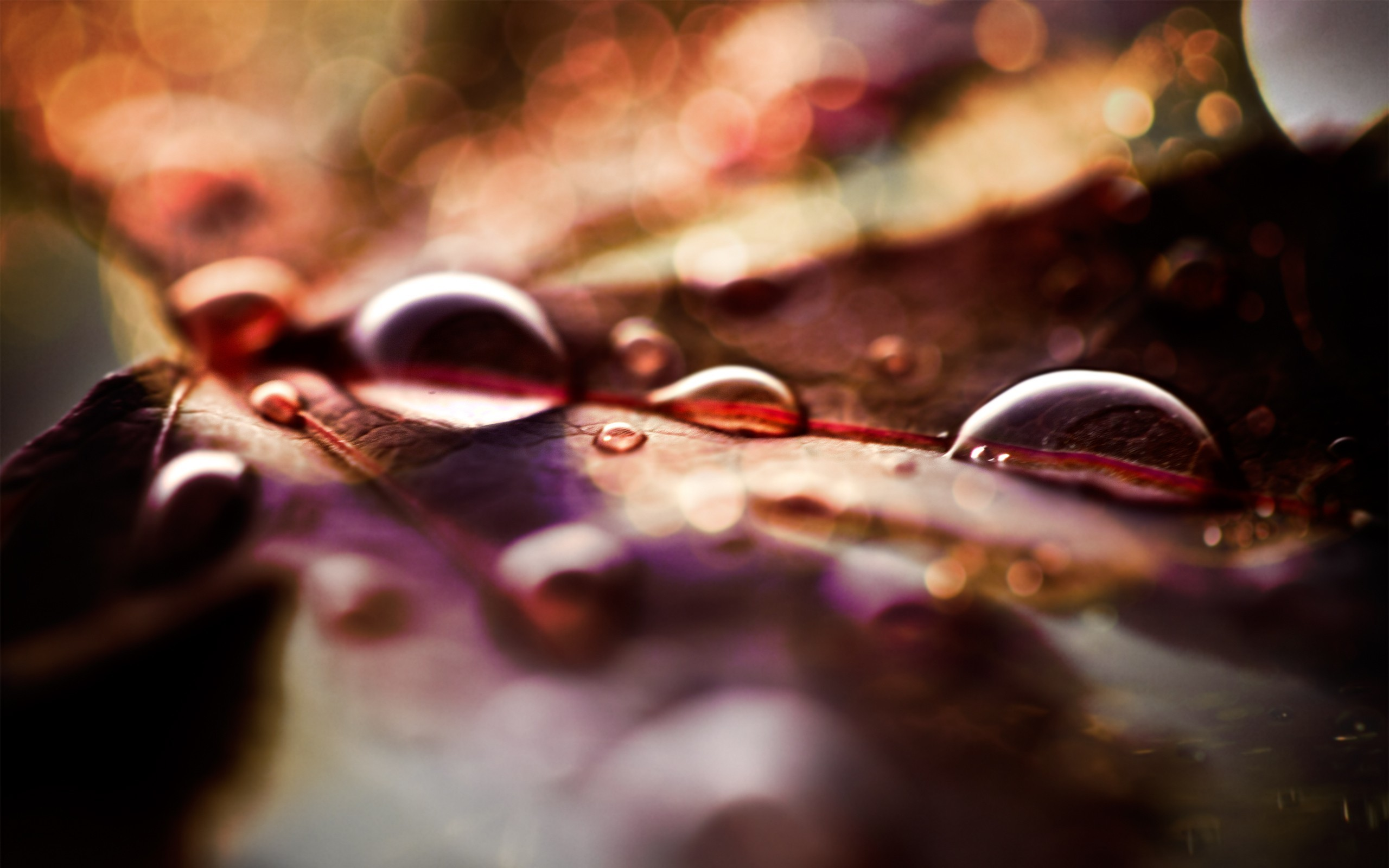 nature water drops macro HD Wallpaper