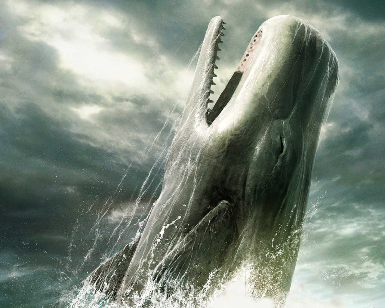 nature Whales HD Wallpaper