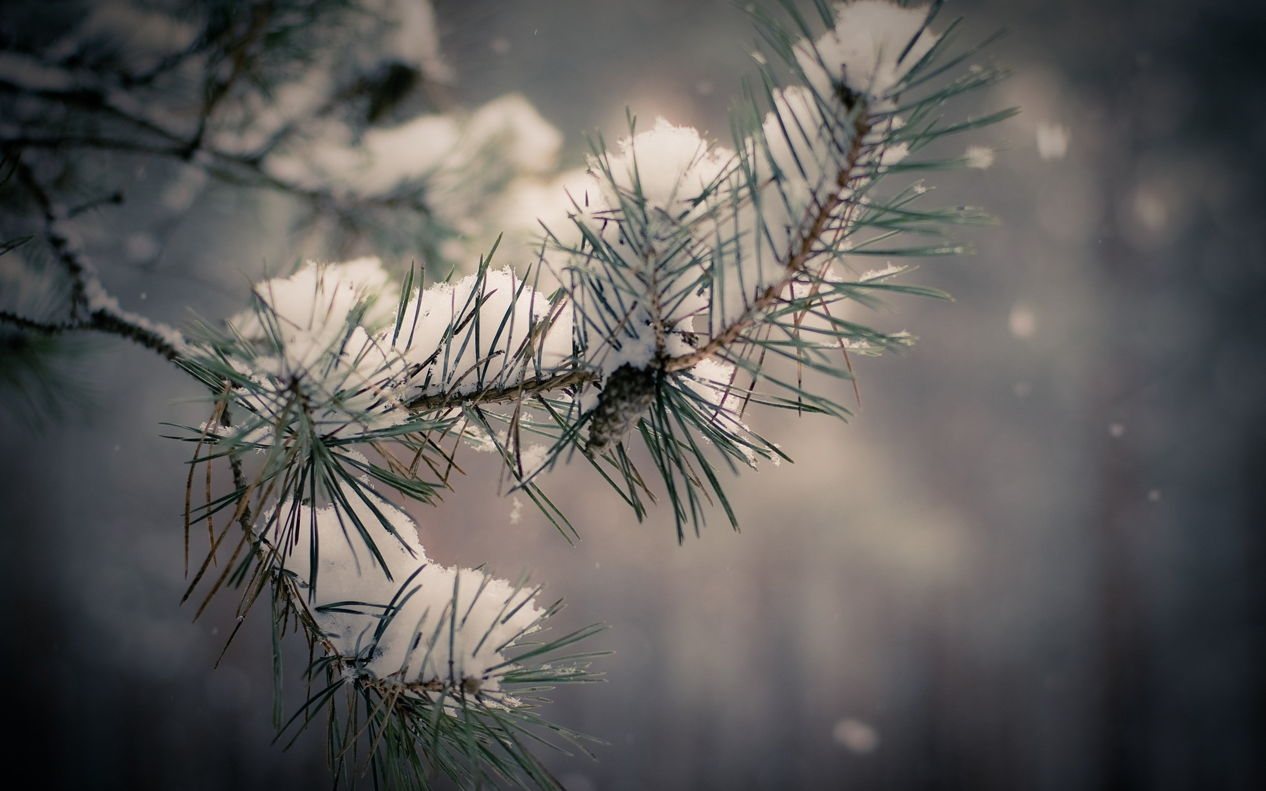nature winter snow Trees HD Wallpaper