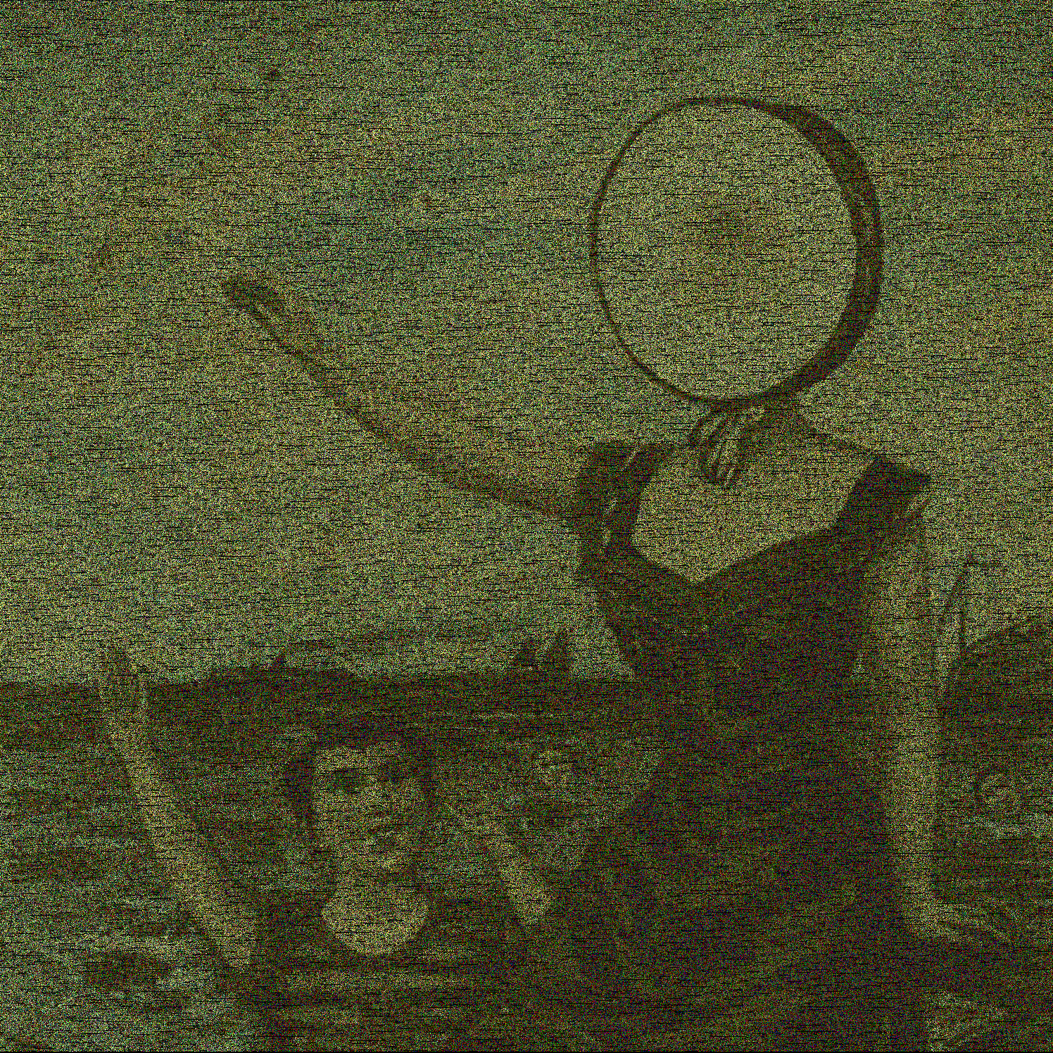 neutral milk Hotel Food HD Wallpaper