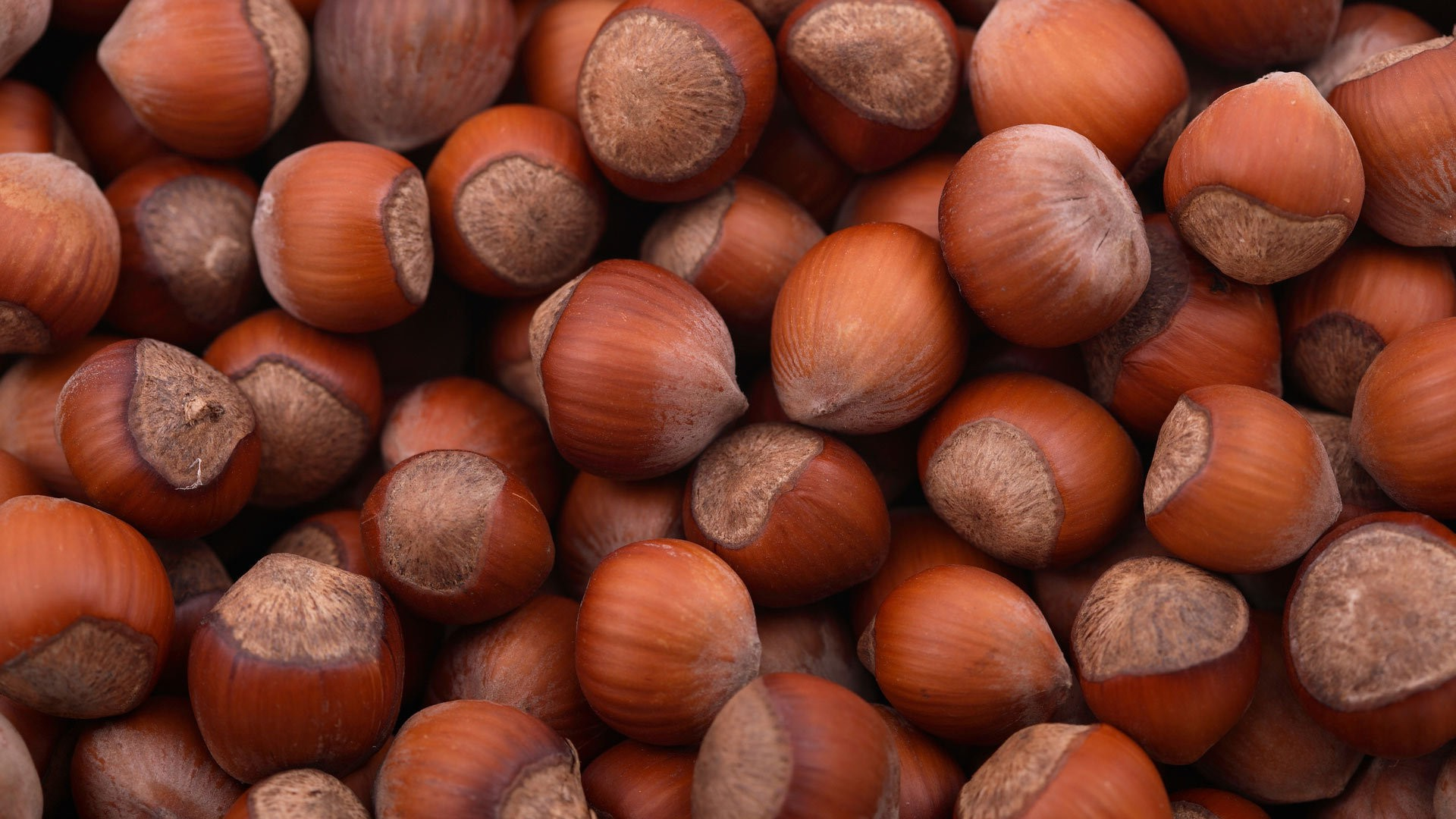 nuts hazelnuts HD Wallpaper