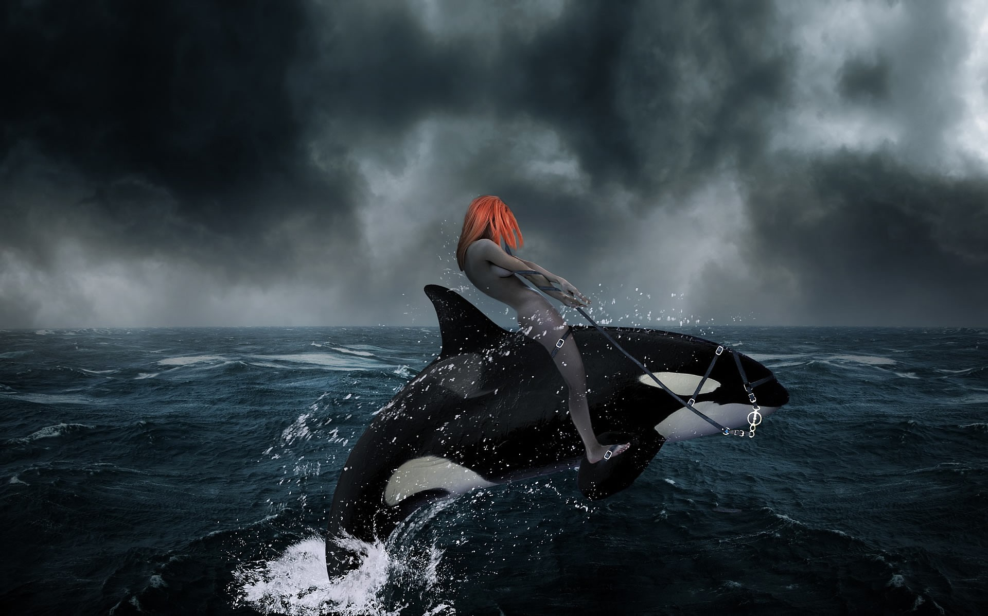 ocean killer whales orange HD Wallpaper