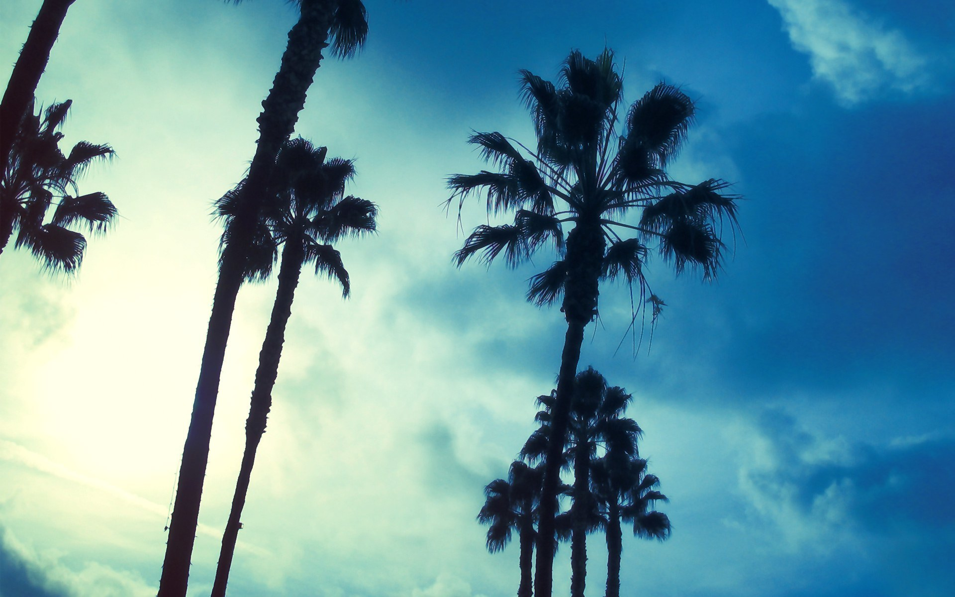 palm Trees nature HD Wallpaper