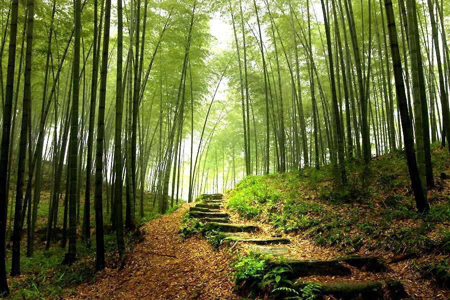paths forests HD Wallpaper