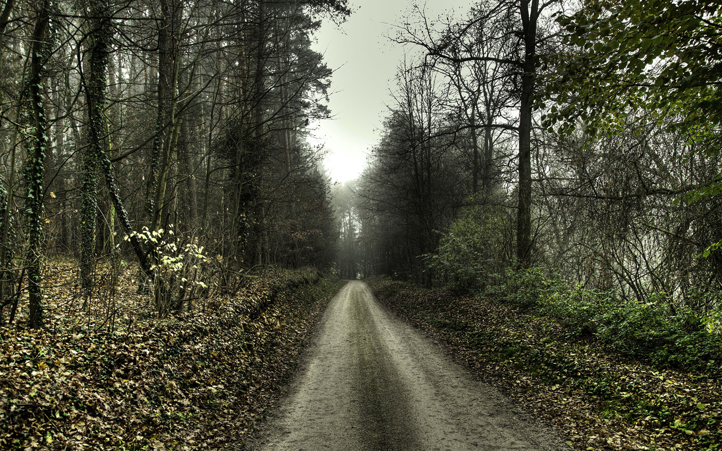 paths roads trail Trees HD Wallpaper