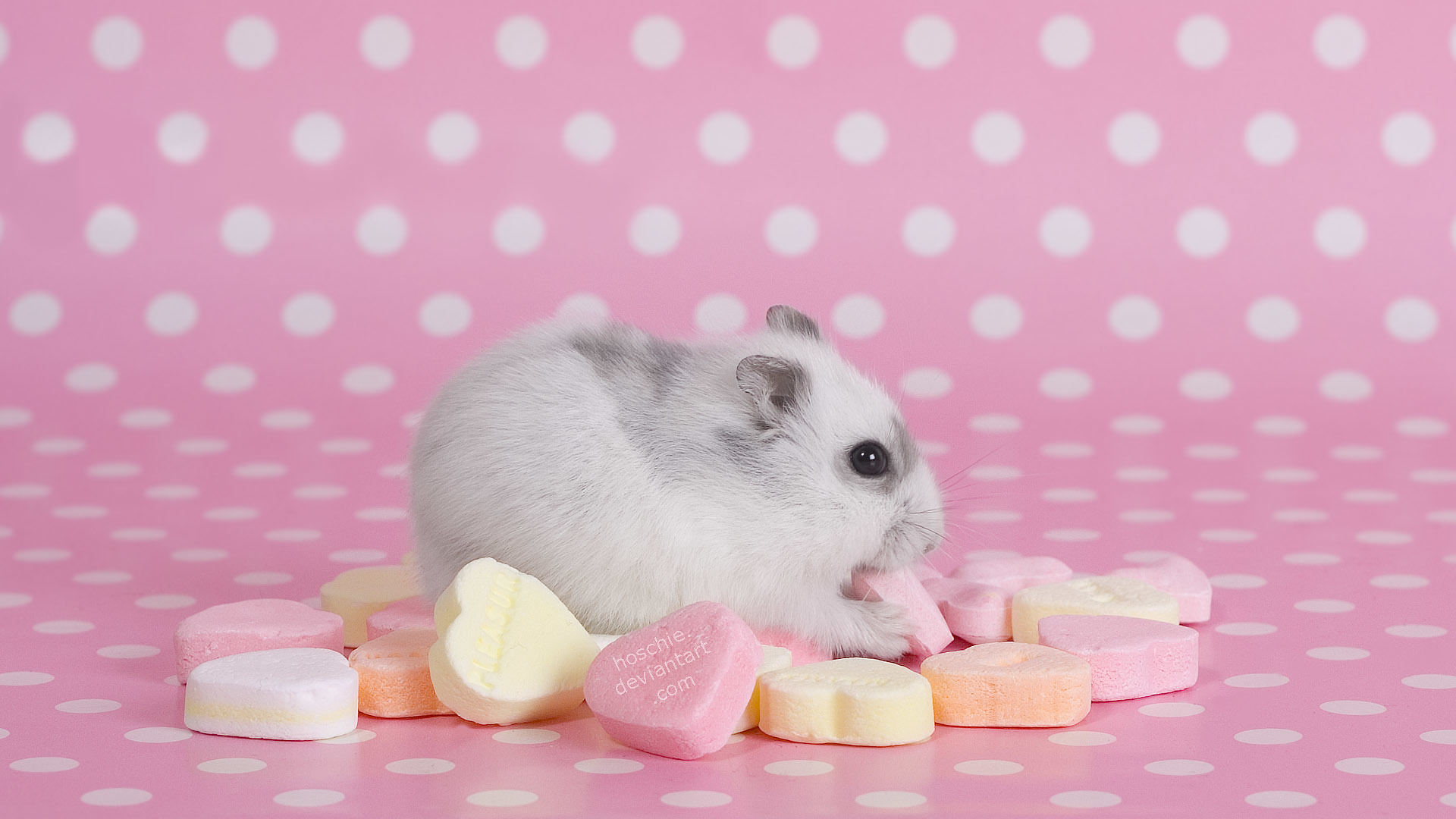 pink hamsters Hearts Candies