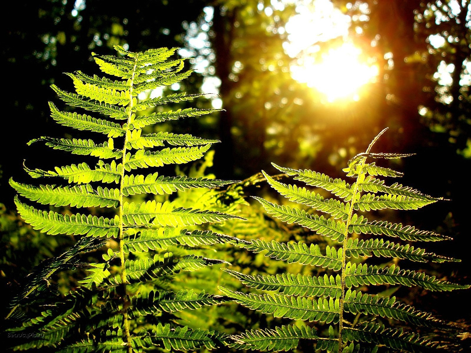 Plants sunlight Ferns blurred HD Wallpaper