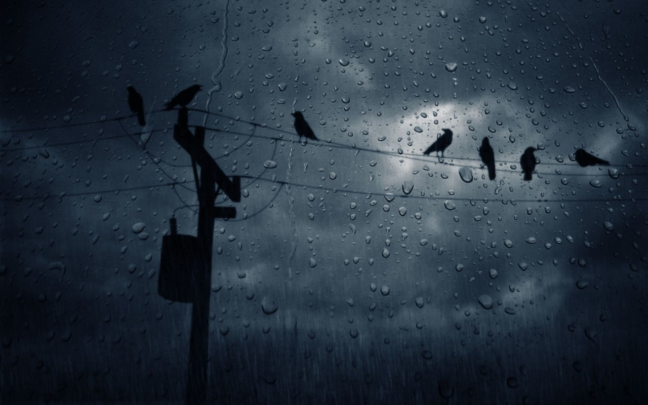 rain Birds power lines HD Wallpaper
