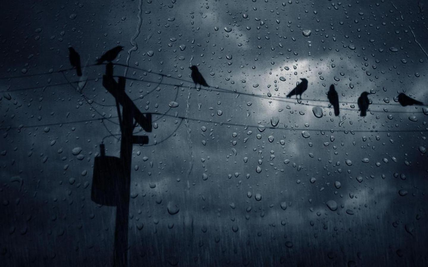 rain Birds power lines