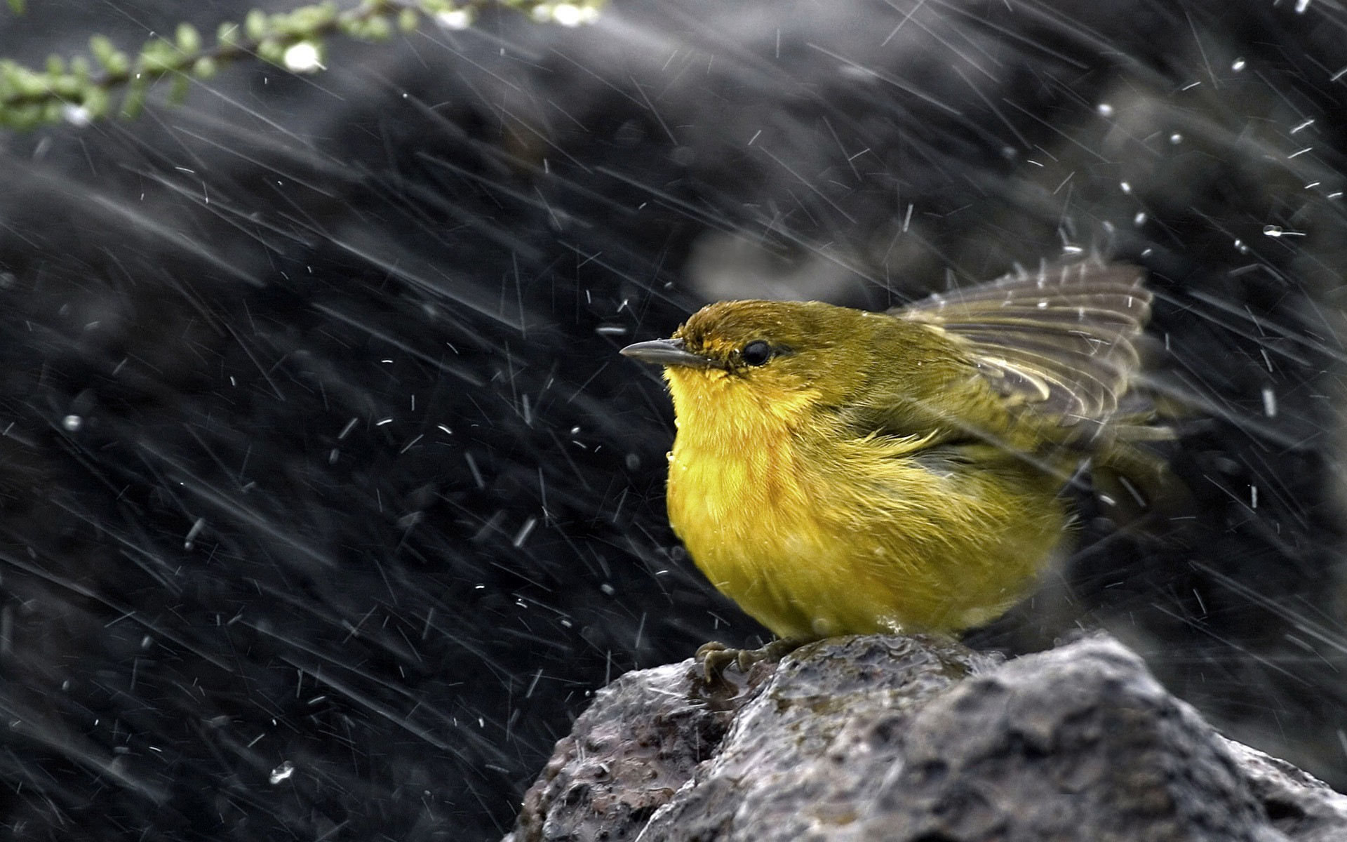 rain Birds wind yellow HD Wallpaper