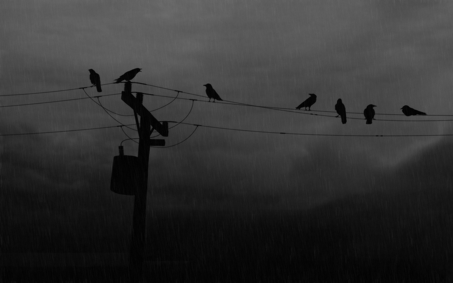 rain power lines crows HD Wallpaper