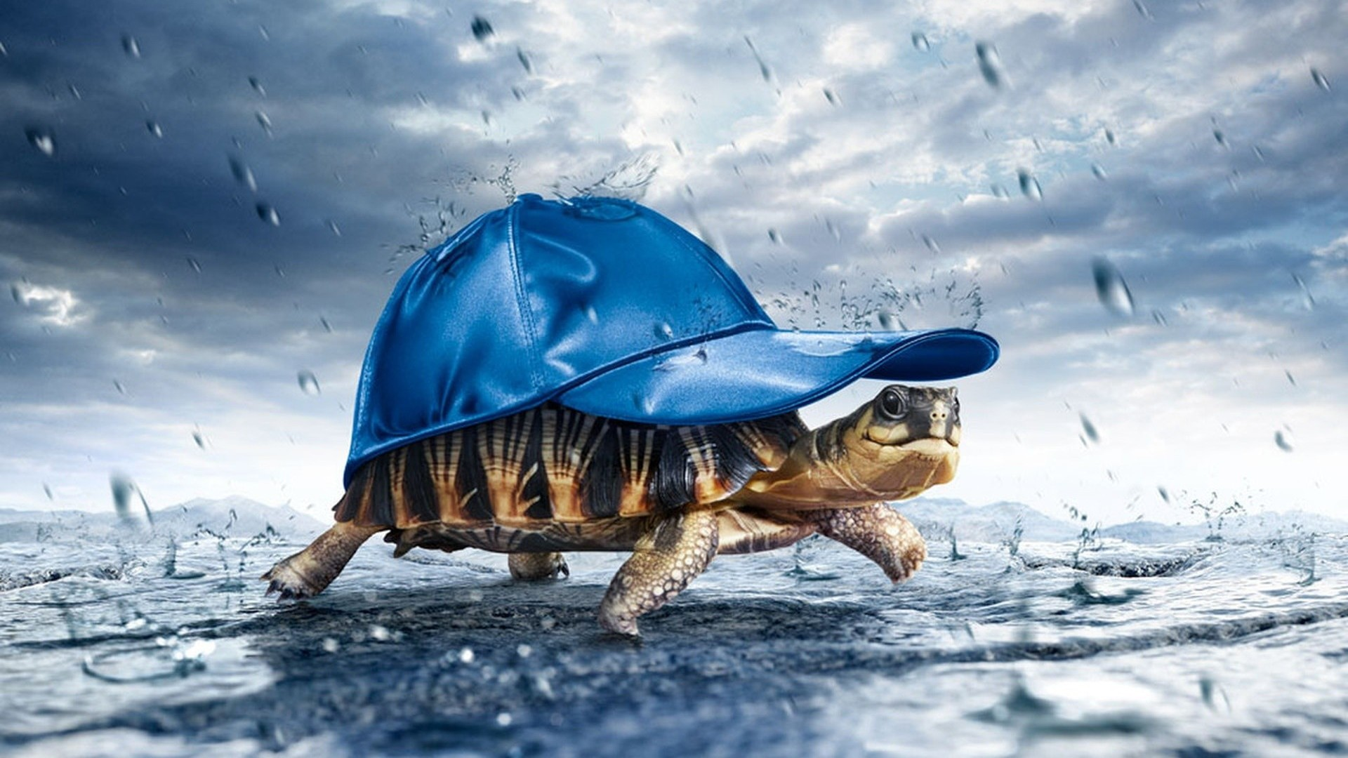 rain turtles HD Wallpaper