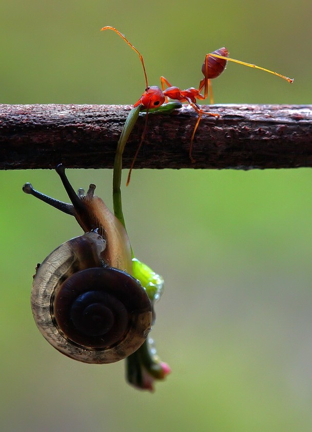 red Animals ants snails