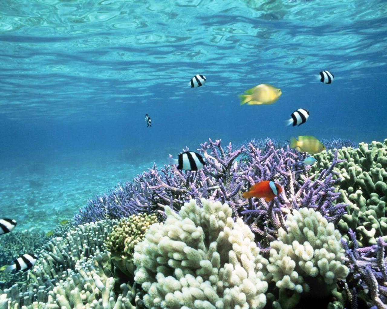 Underwater Tropical Fish underwater tropical fish