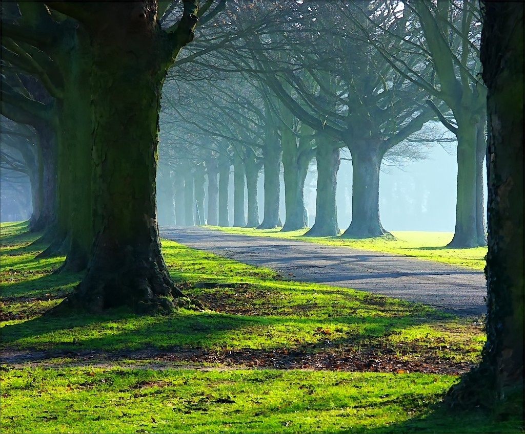 roads forests Great forest HD Wallpaper