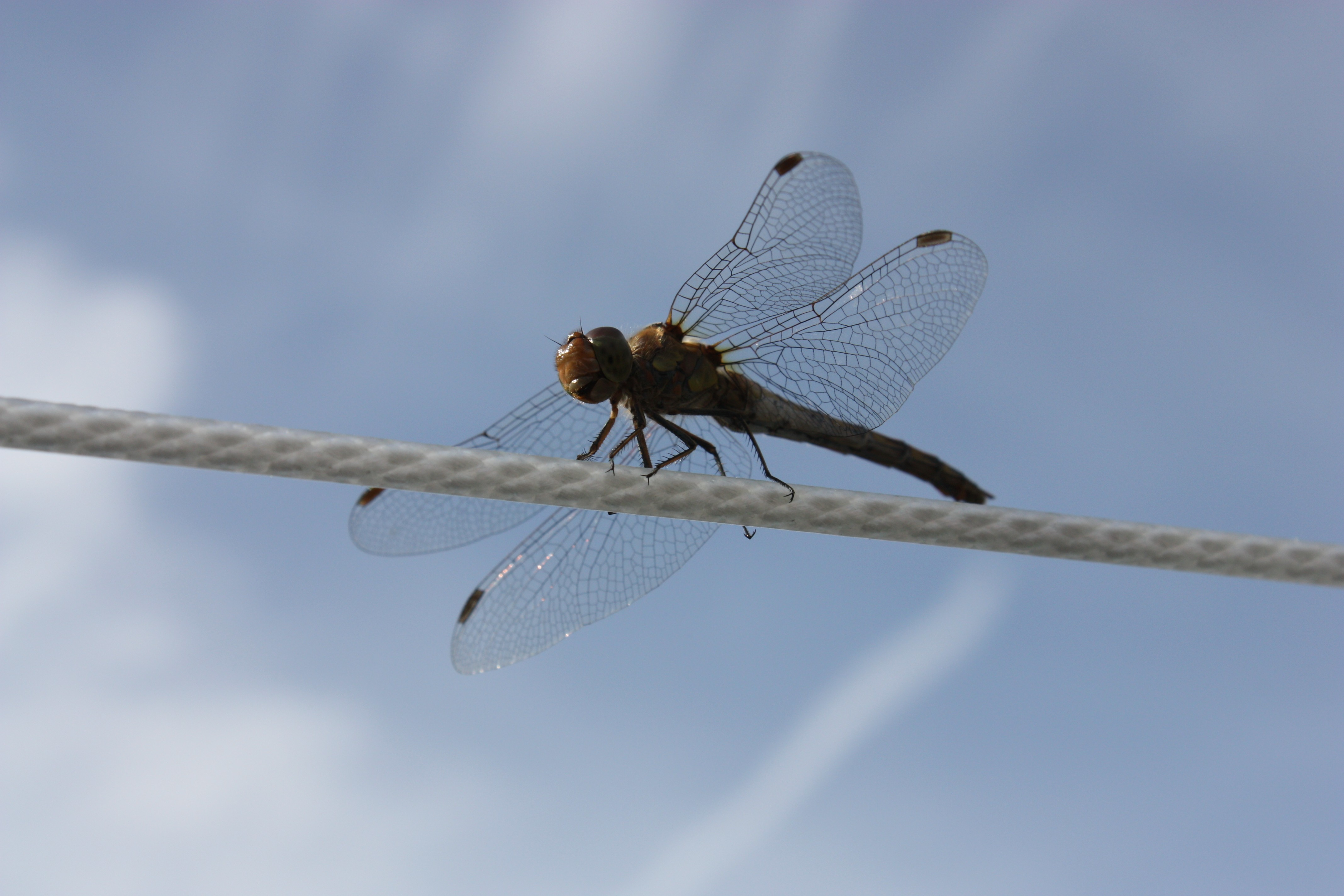 Ropes skyscapes Dragonflies insects HD Wallpaper