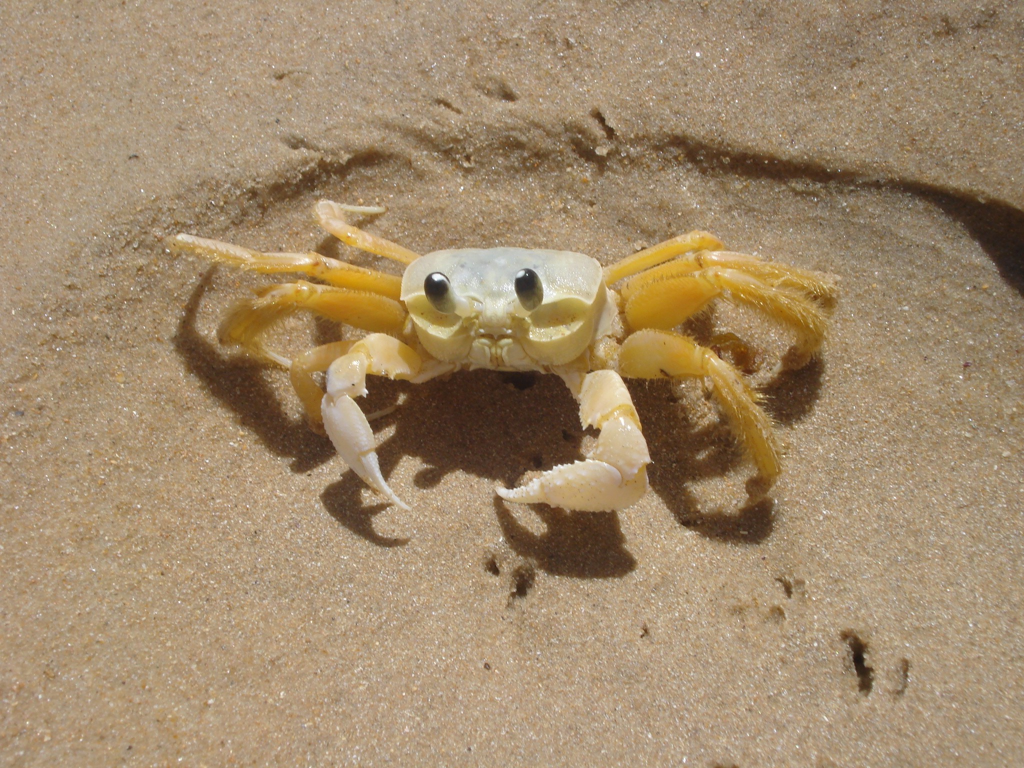 sand summer crabs Beaches HD Wallpaper