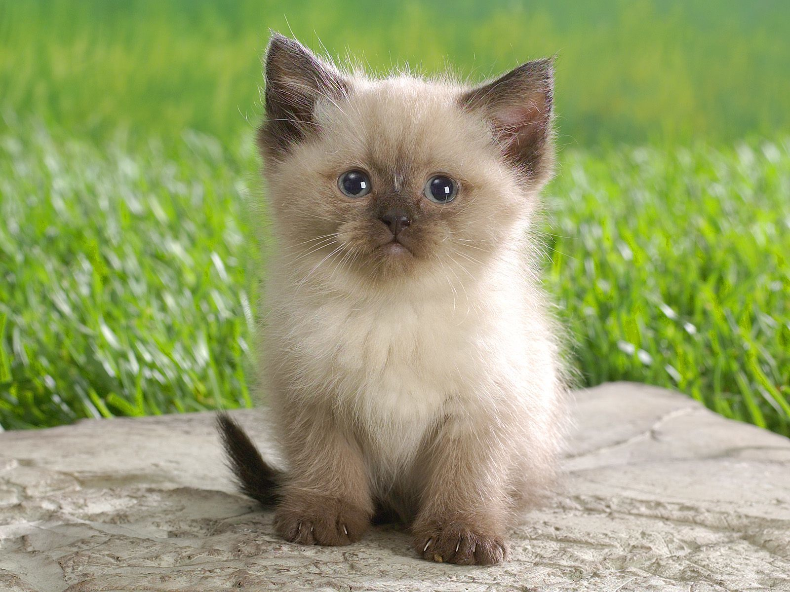 Kitty world cute kitten wallpaper cute kitten wallpaper thecheapjerseys Gallery