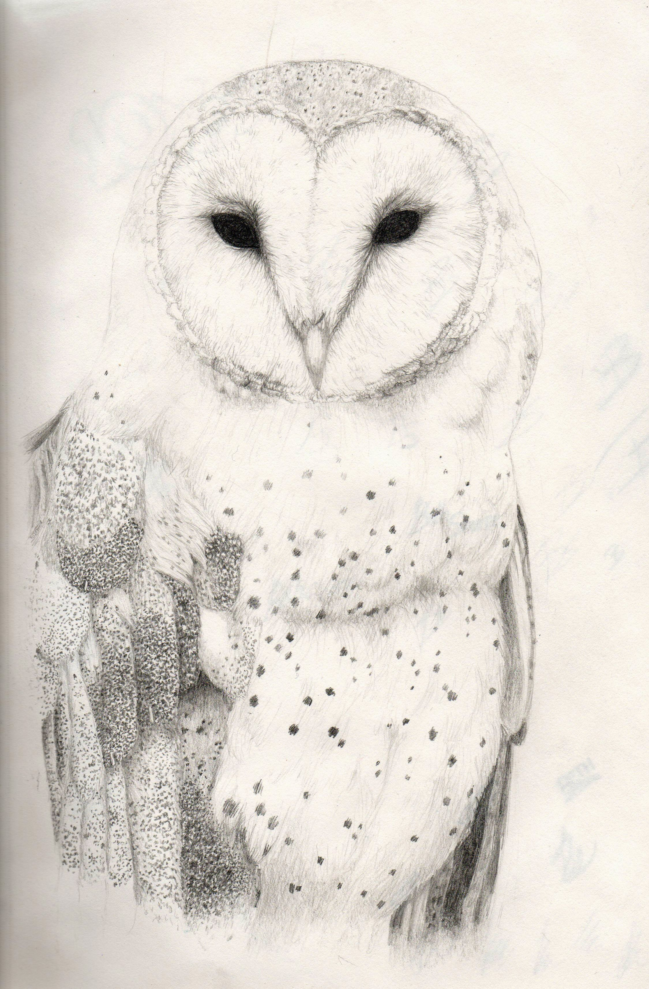 sketches Owls HD Wallpaper