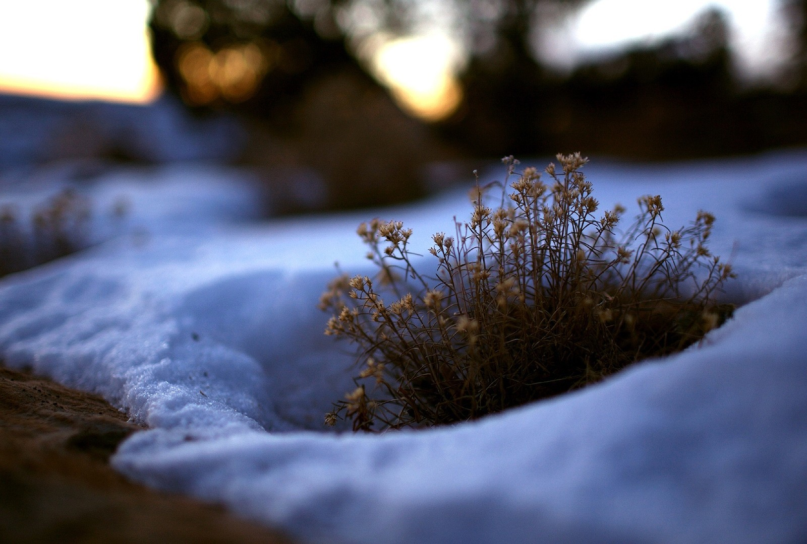 snow Plants HD Wallpaper