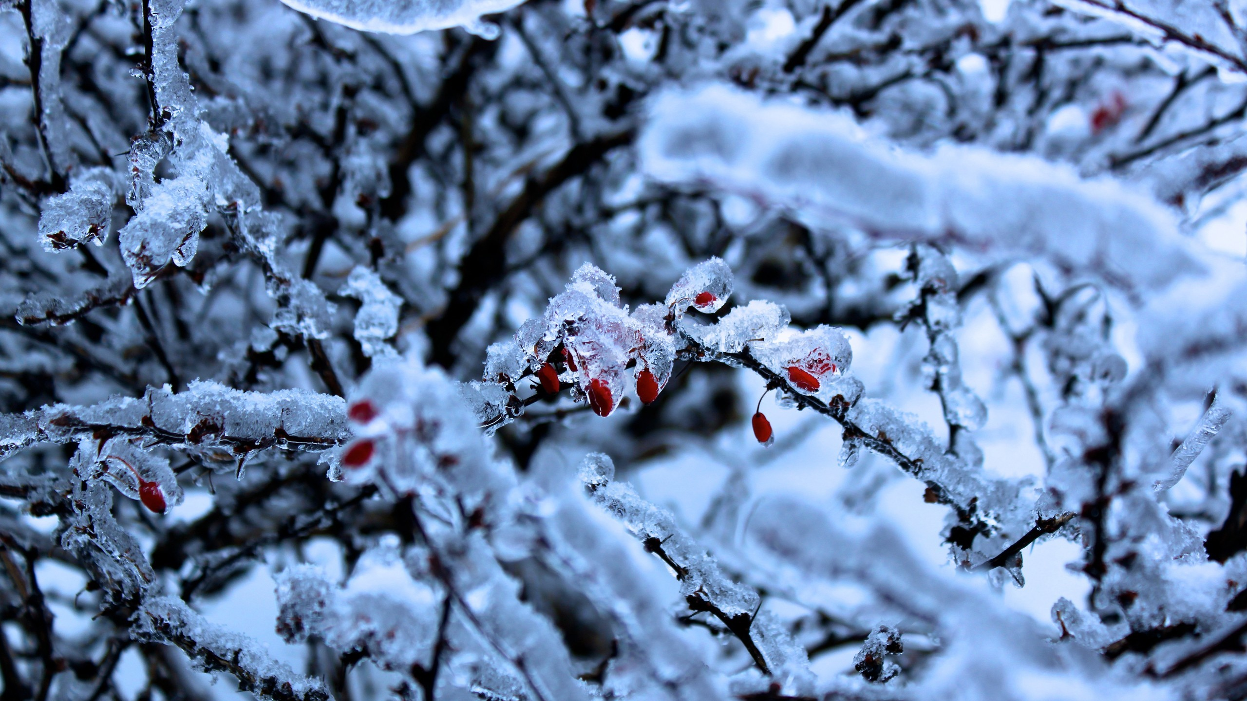 snow Trees frost HD Wallpaper
