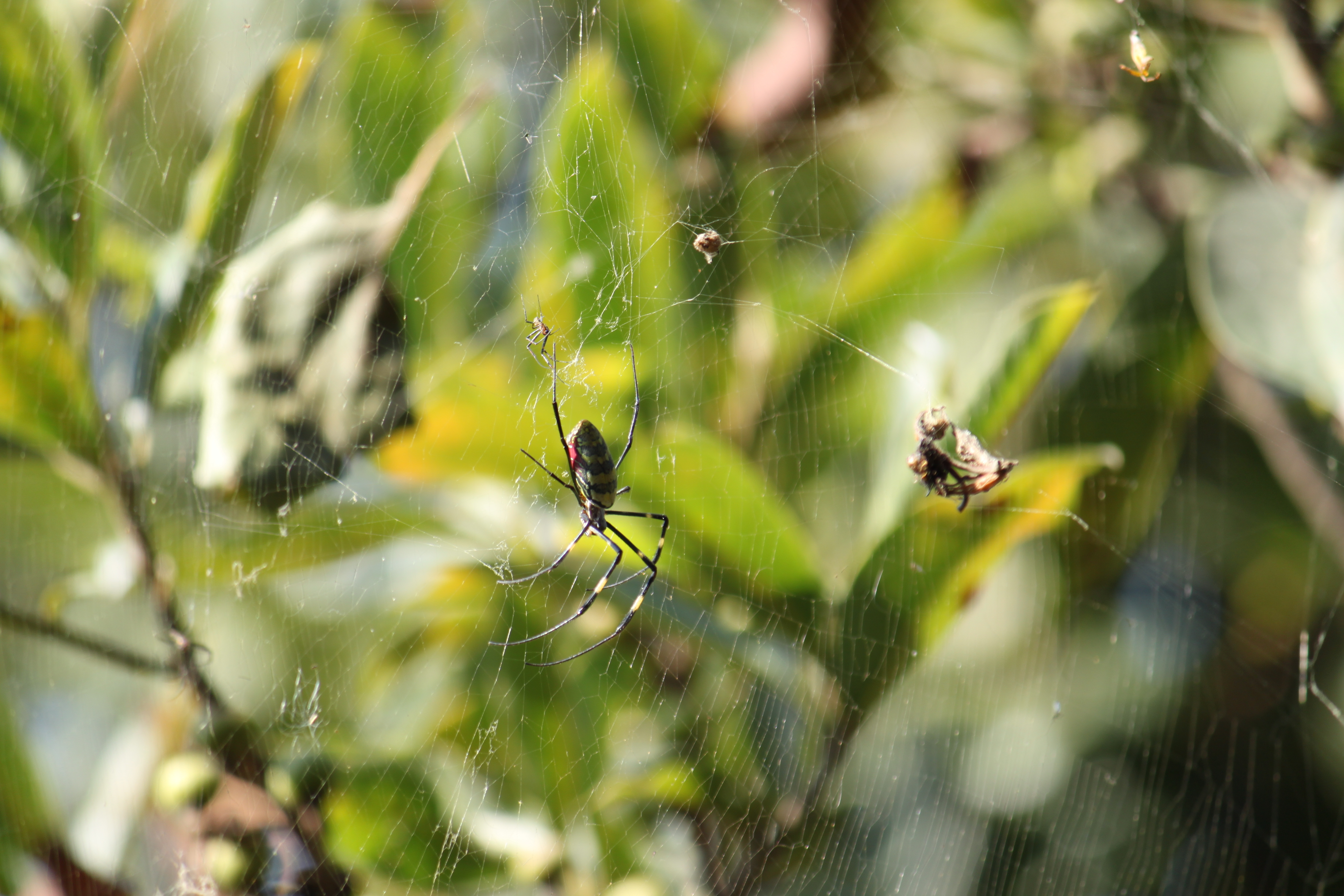 spider webs web insect HD Wallpaper