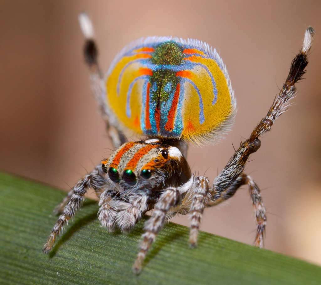 spiders makro insect close-up HD Wallpaper