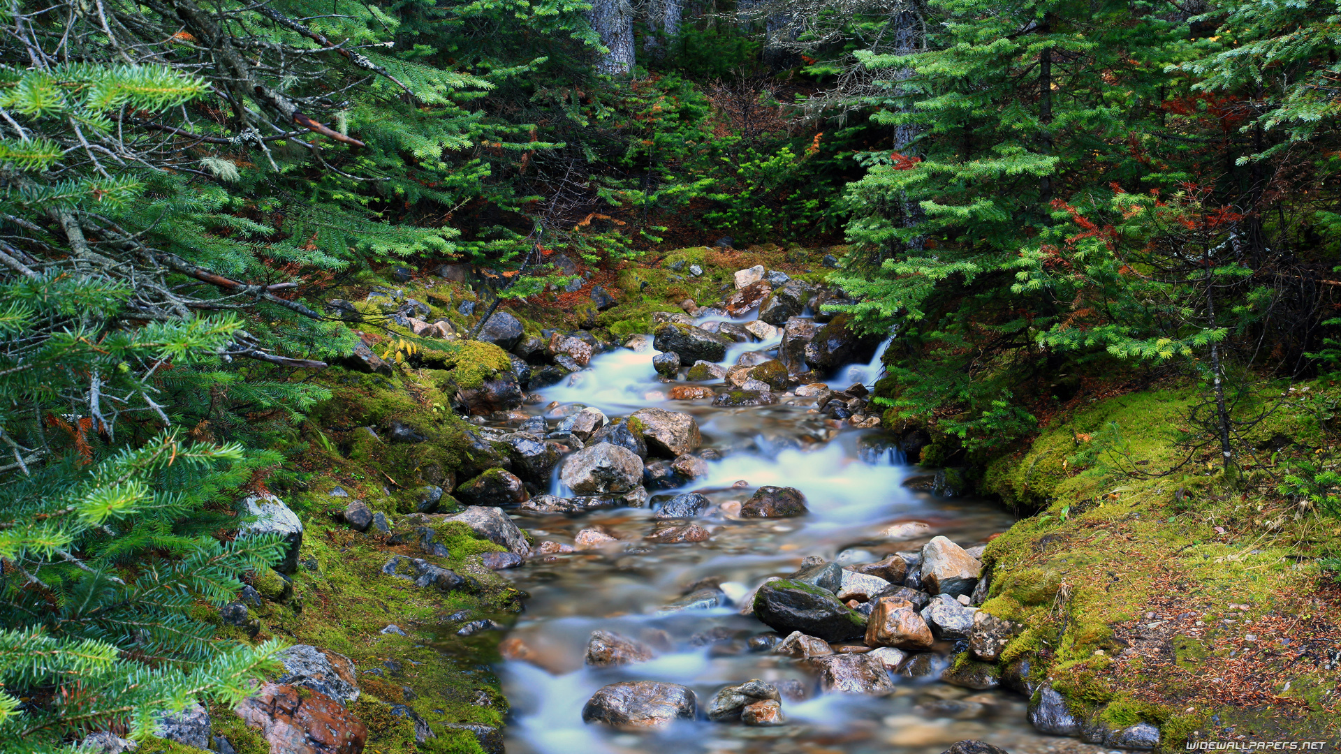 stream creek forest Trees HD Wallpaper