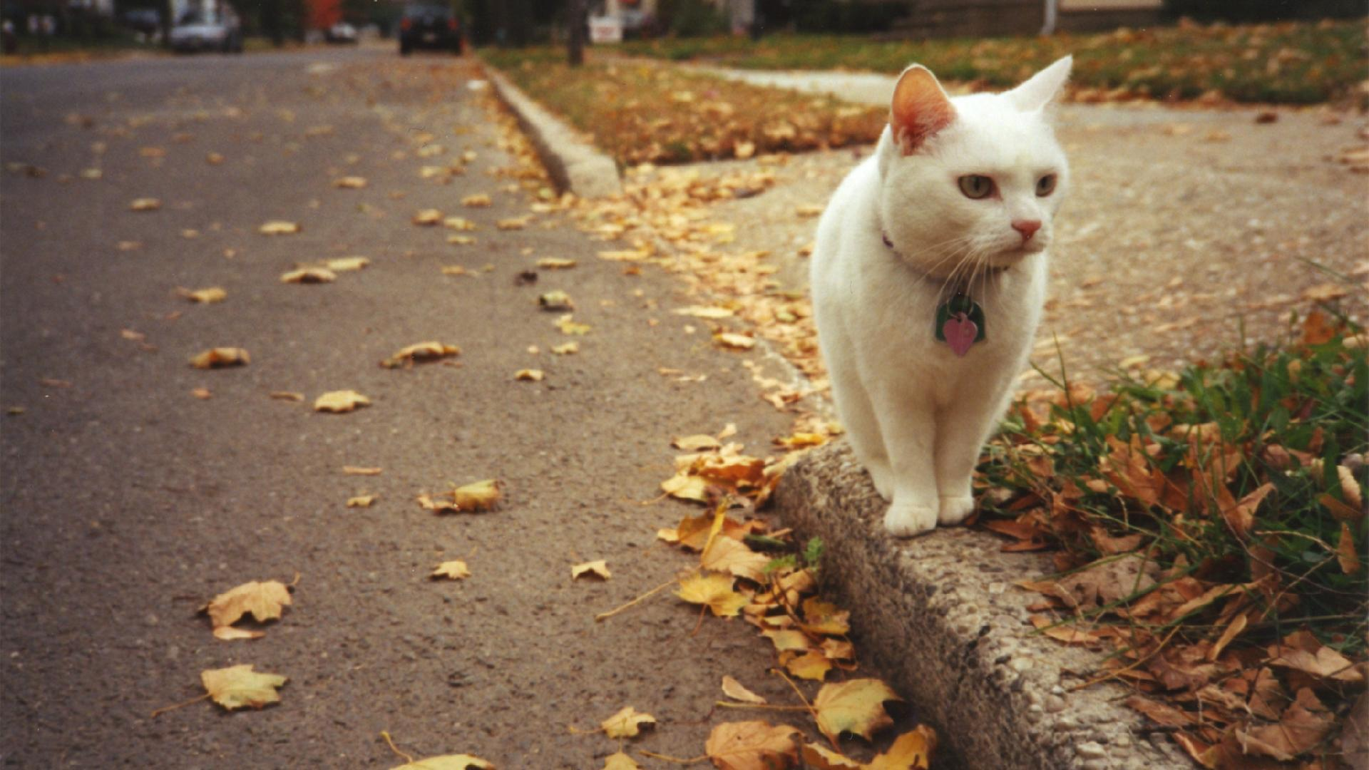 streets cats Animals roads HD Wallpaper