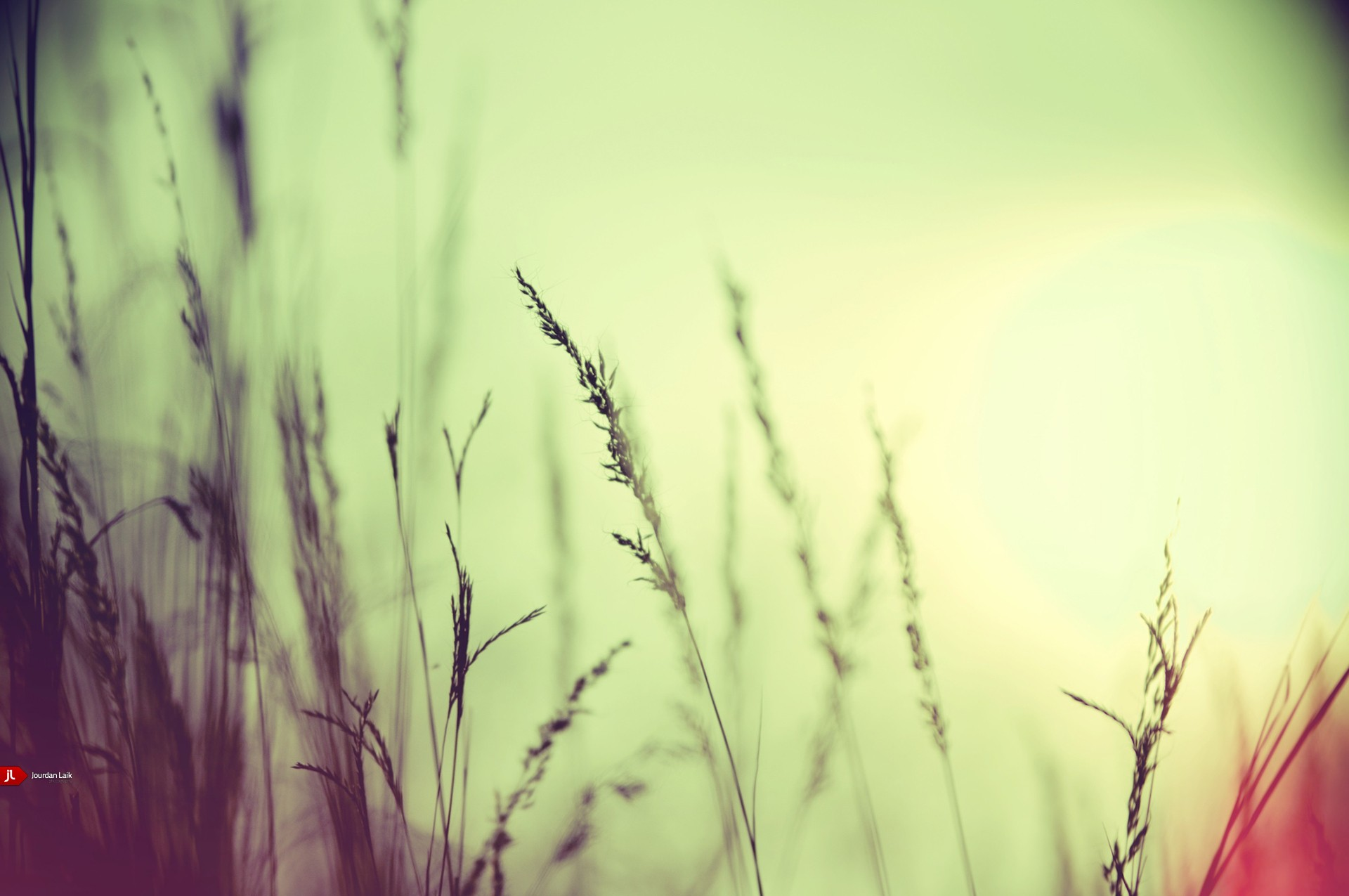sunlight bokeh autumn wheat HD Wallpaper